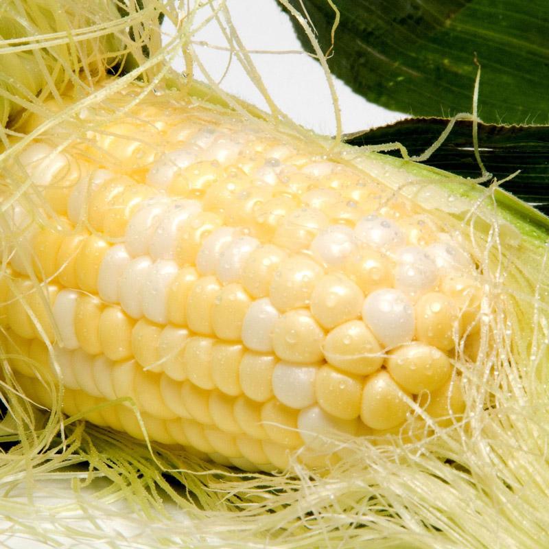 suruttokomachi02_cornsilk