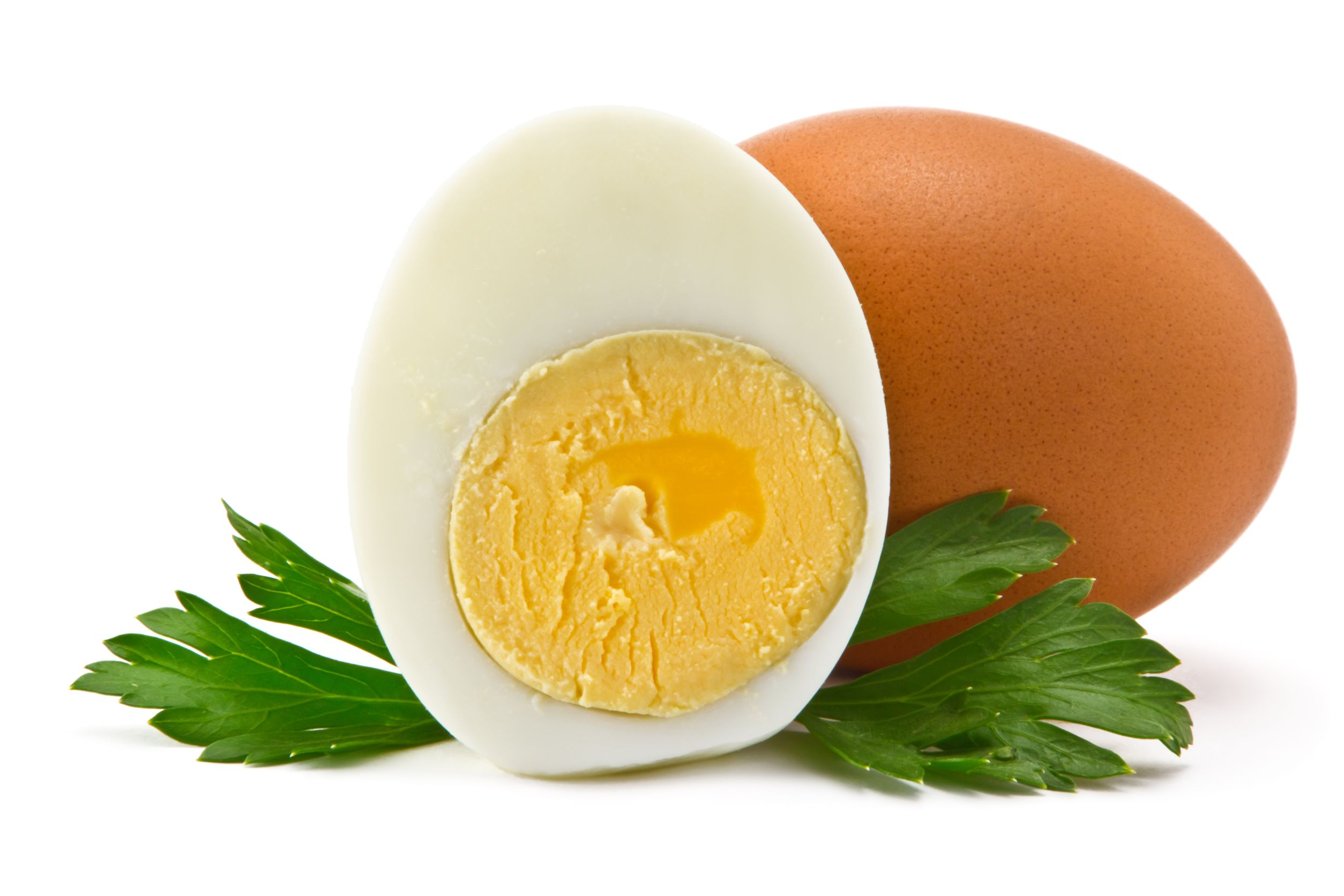 pilotl39130800052.jpg - one egg and half a boiled egg with parsley leaves on a white background
