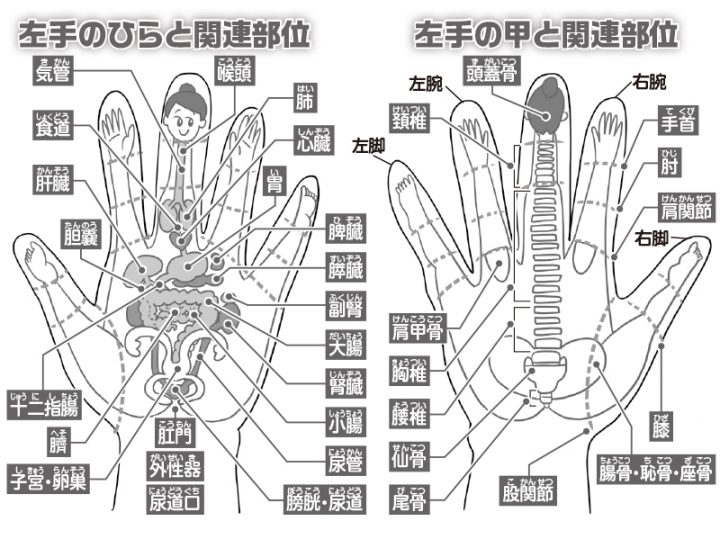 手の反射区を解説するイラスト