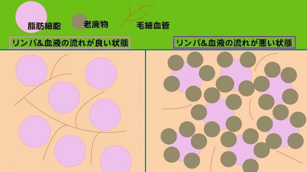shibousaibo_graph