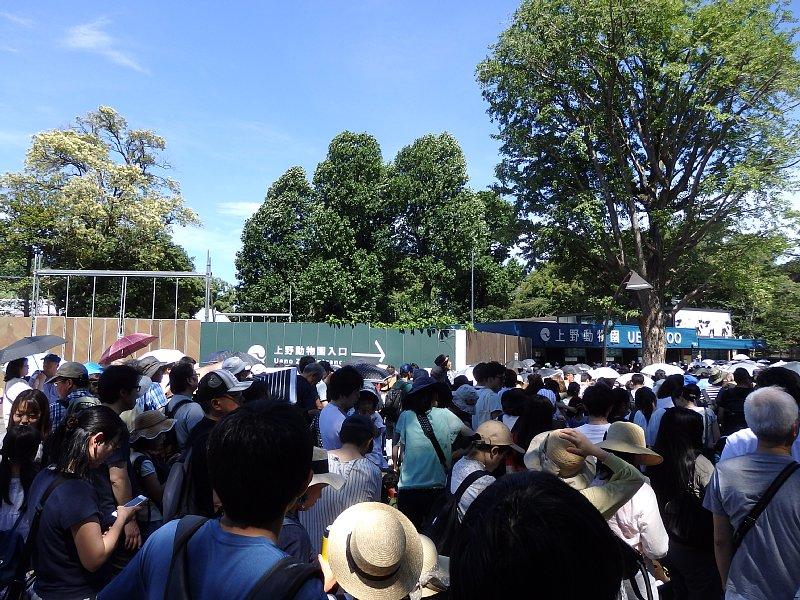 真夏の炎天下。上野動物園の前には、パンダのシャンシャンをひと目見ようと多くの人が詰めかけている