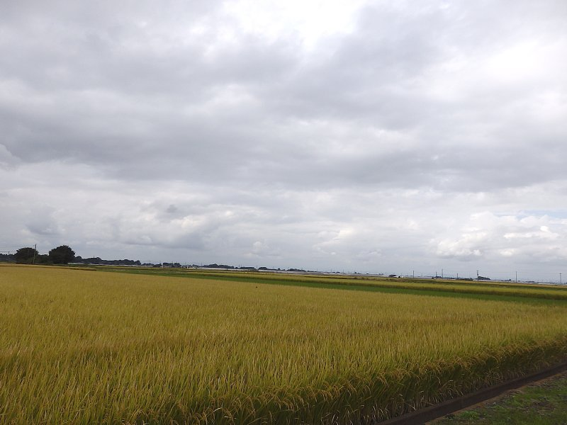 茨城の風景
