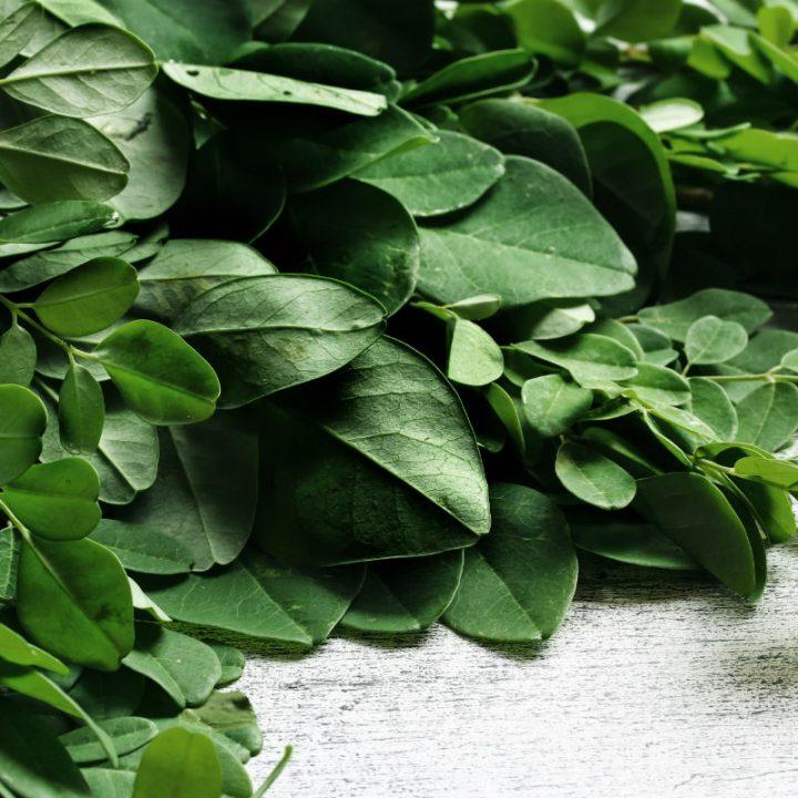 モリンガの葉のイメージカット