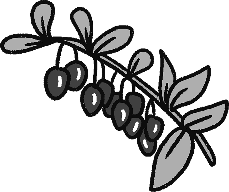 くこの実と葉のイラスト