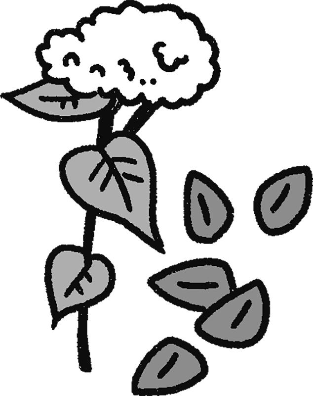 そばの花、葉、実のイラスト