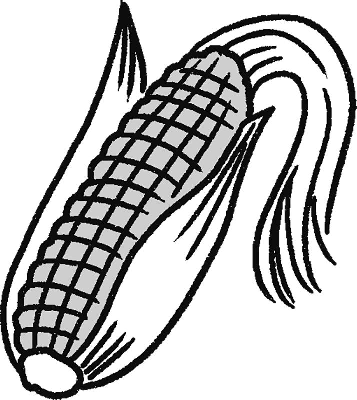 トウモロコシ実とひげのイラスト