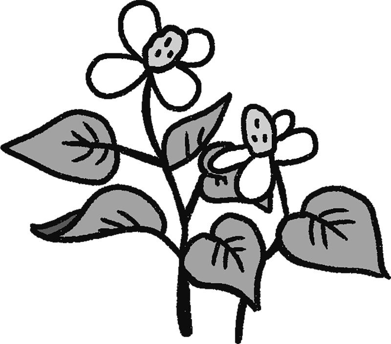 どくだみの花と葉のイラスト