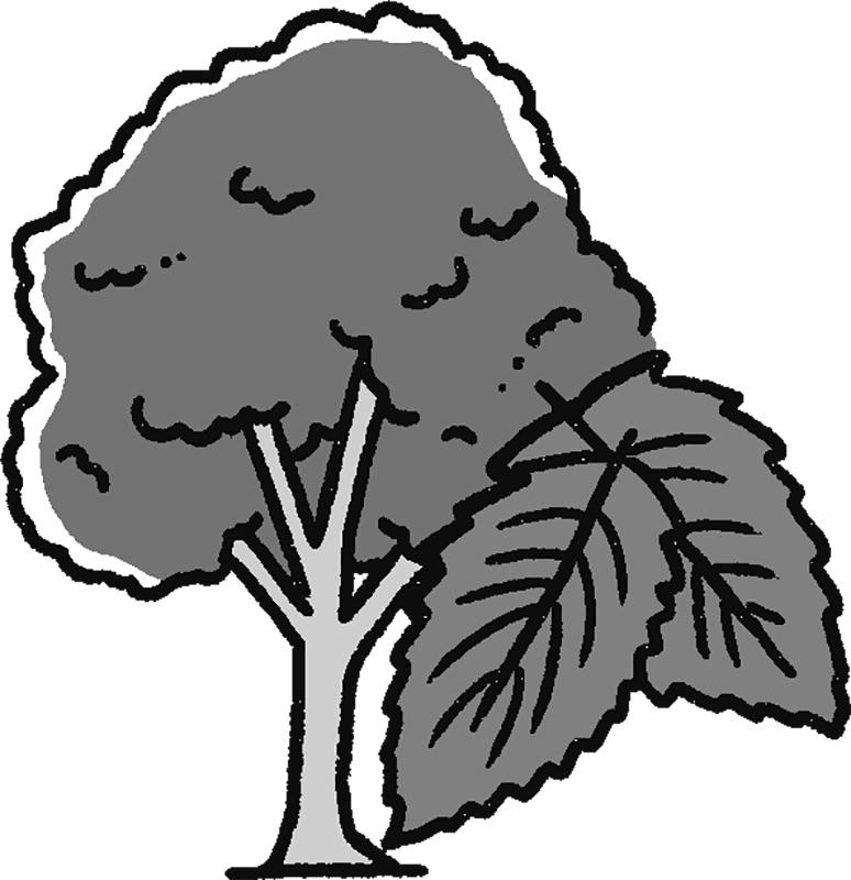 杜仲の木と葉のイラスト