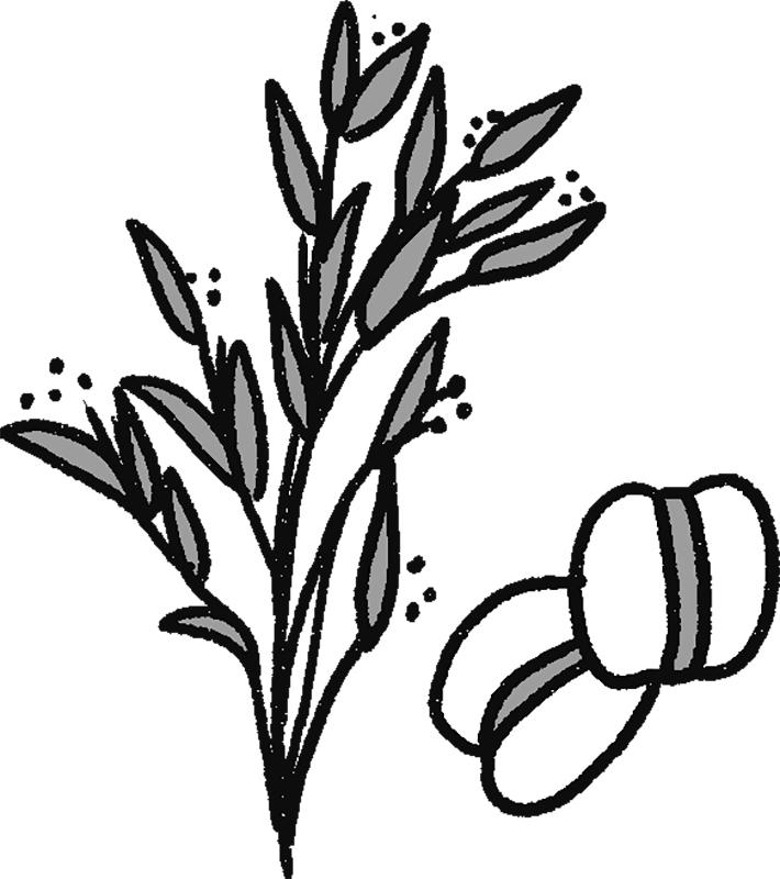 はと麦の穂と実のイラスト