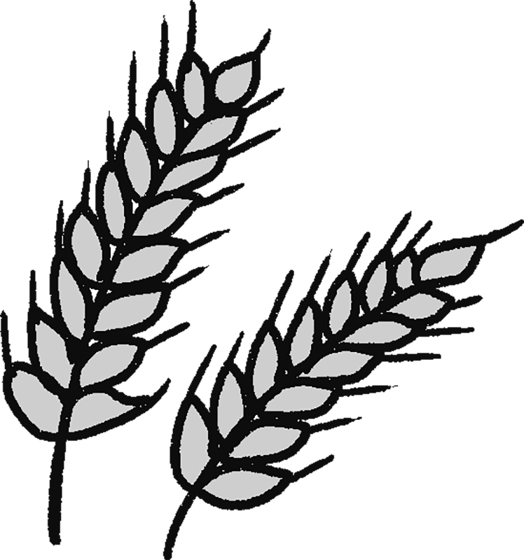 大麦の穂のイラスト