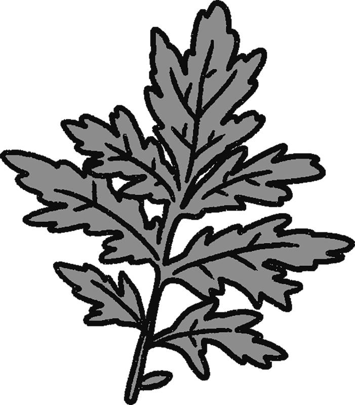 よもぎの葉のイラスト