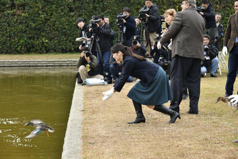 鴨を放鳥される眞子さま