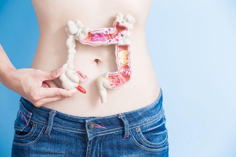 腸の模型をお腹のところで持つ女性