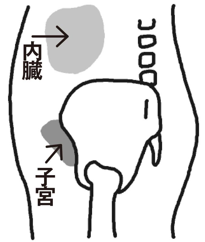 正しい状態にある骨盤を図解
