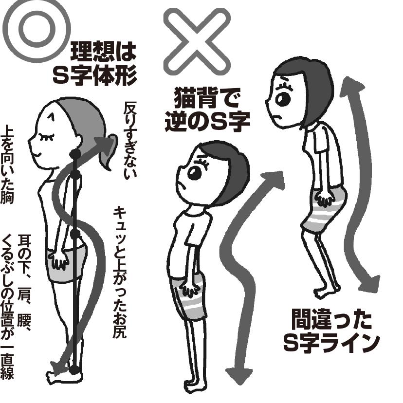 理想的なS字体形と、間違った姿勢をイラストで図解