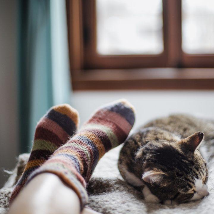 靴下をはいた足と猫