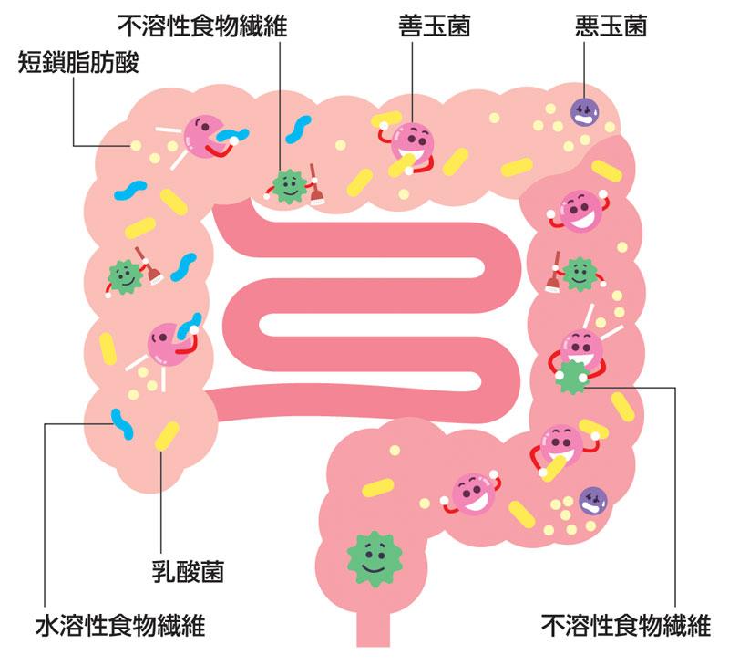 腸内のイメージ図