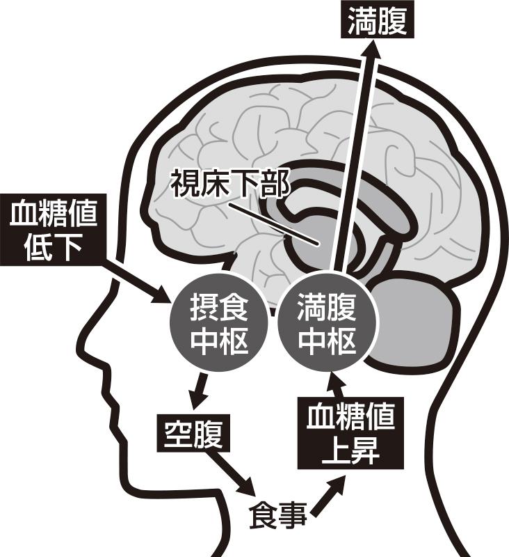 空腹を感じる脳のしくみ図解