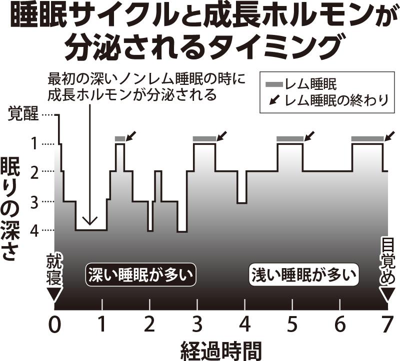 睡眠サイクルと成長ホルモンが分泌されるタイミングを示したグラフ