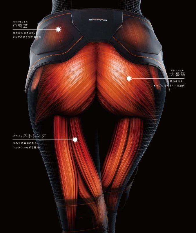 MTG『SIXPAD Bottom Belt(シックスパッド ボトムベルト)』の仕組みを説明するお尻部分の筋肉についての図