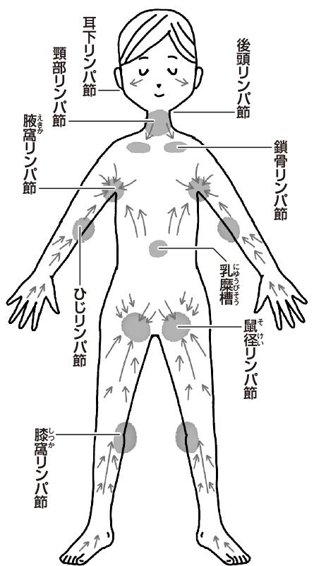 全身を巡るリンパ液と流れの方向図解