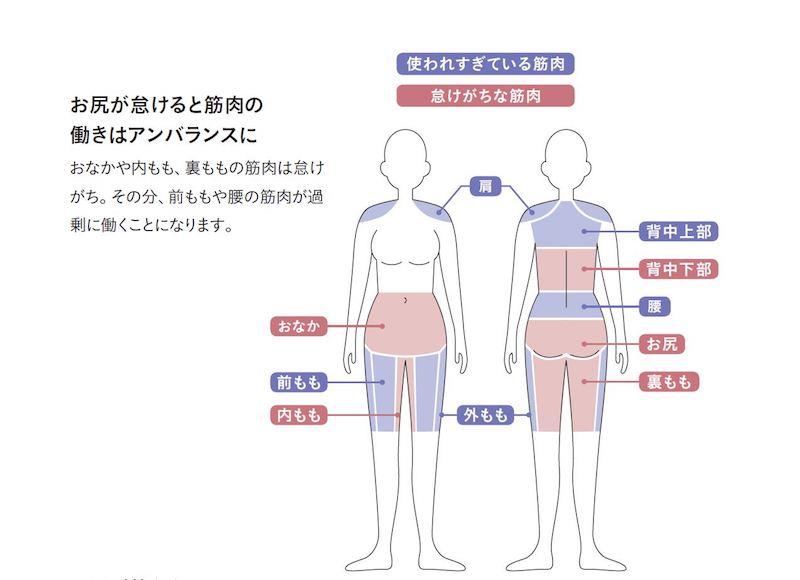 筋肉を説明する人体図