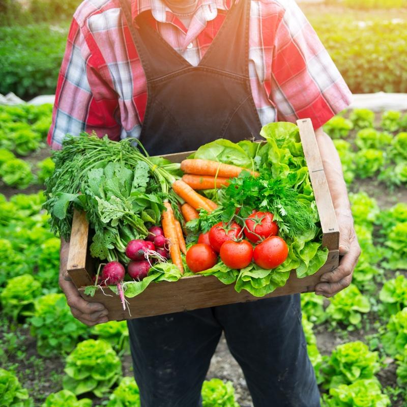 畑の前で野菜の入った箱を持つ人