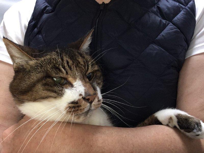 猫の三四郎