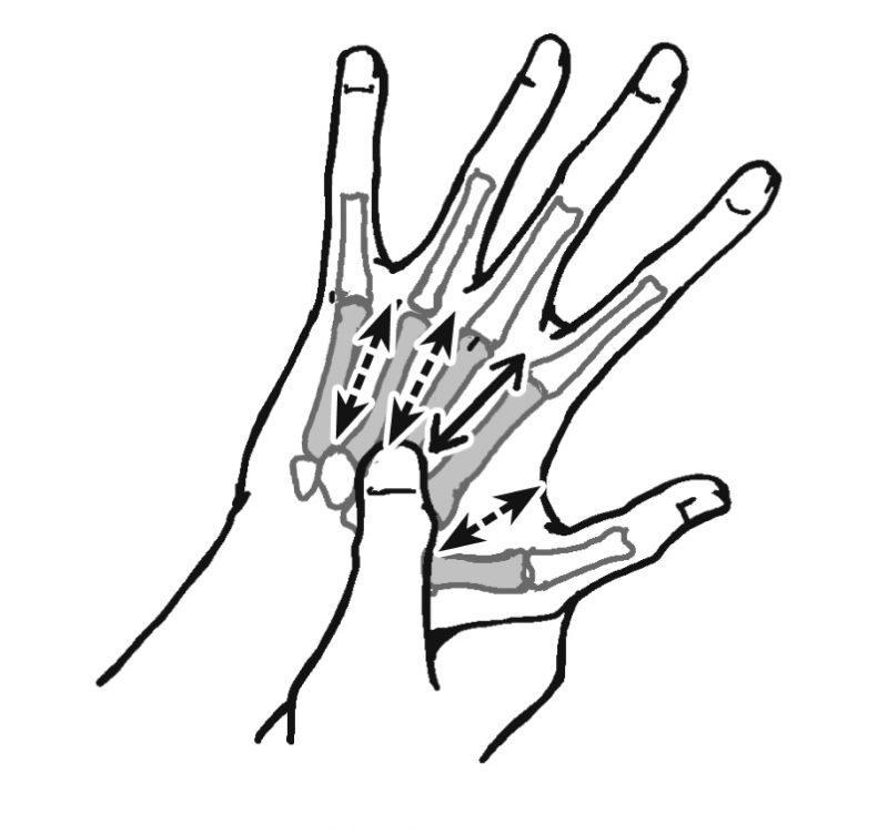 5本ある中手骨の間をさするイラスト
