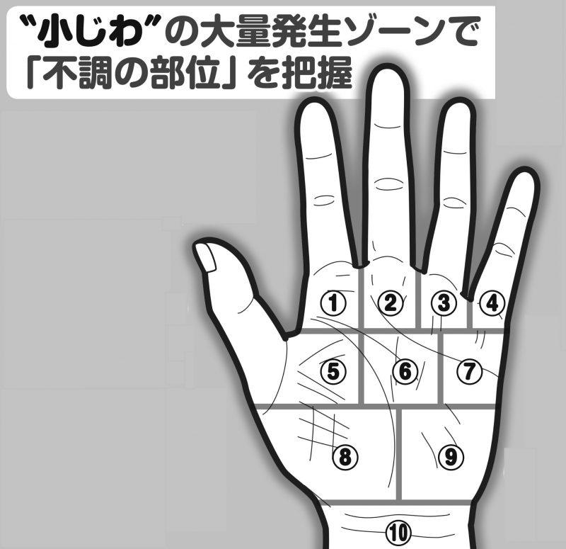 手のひらの小じわが表れる部位を図解している
