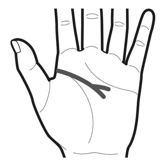 頭脳線の末端が2つに分かれているのをイラストでわかりやすくしている