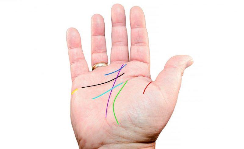 手のひらに手相の線に色をつけてわかりやすくしている