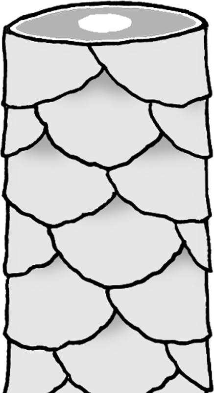 キューティクルの鱗部分のイラスト