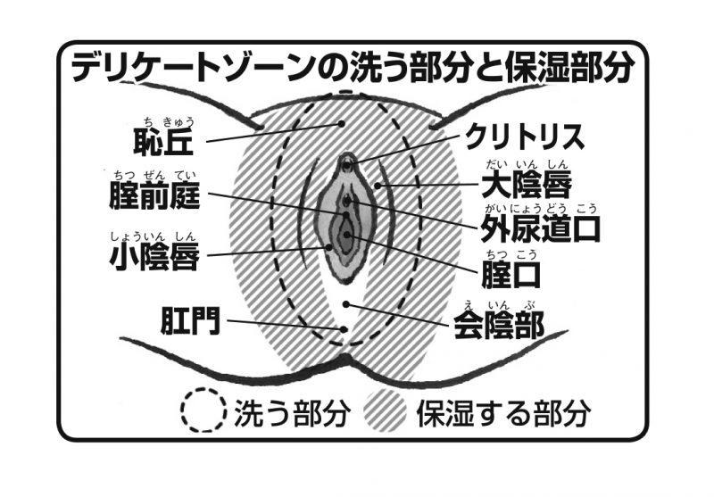 デリケートゾーンの洗う部分と保湿部分を示したイラスト