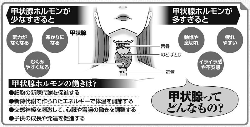 甲状腺について説明する解説図解