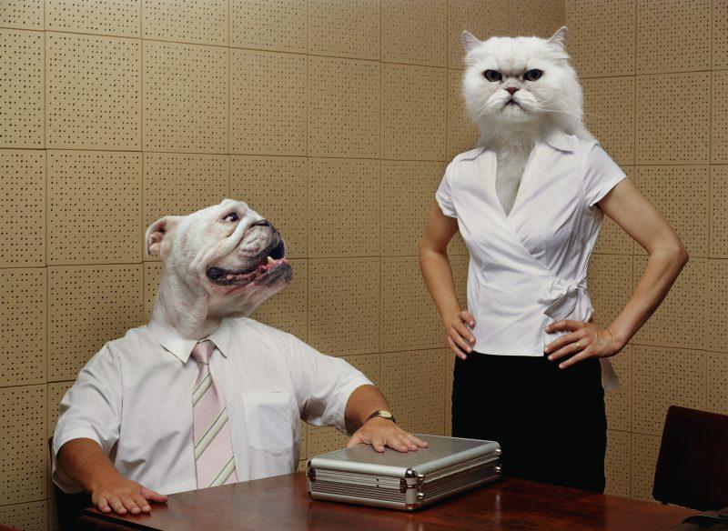 犬の被り物をした夫と猫の被り物をした妻がにらみ合っている