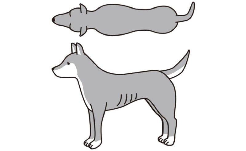 BCS2(やや、やせ)の犬のイラスト