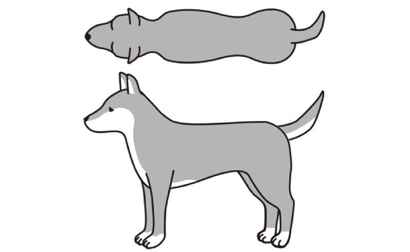 BCS3(理想的)の犬のイラスト