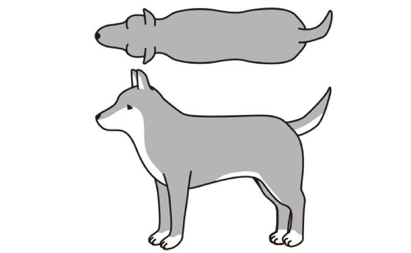 BCS4(やや、肥満)の犬のイラスト