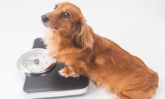 飼い犬の55%が実は太っている!? 愛犬と一緒に行うダイエットのすすめ