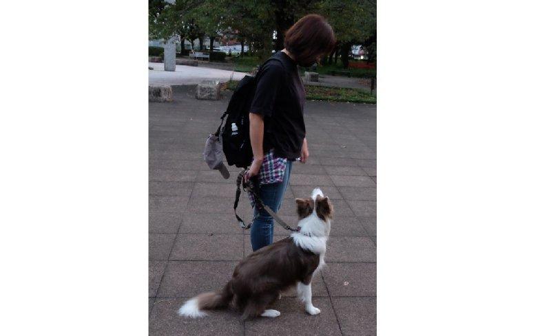 犬に「お座り」と声掛けしている飼い主