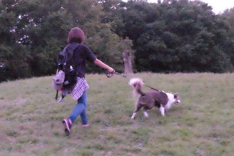 愛犬と飼い主が散歩をしている