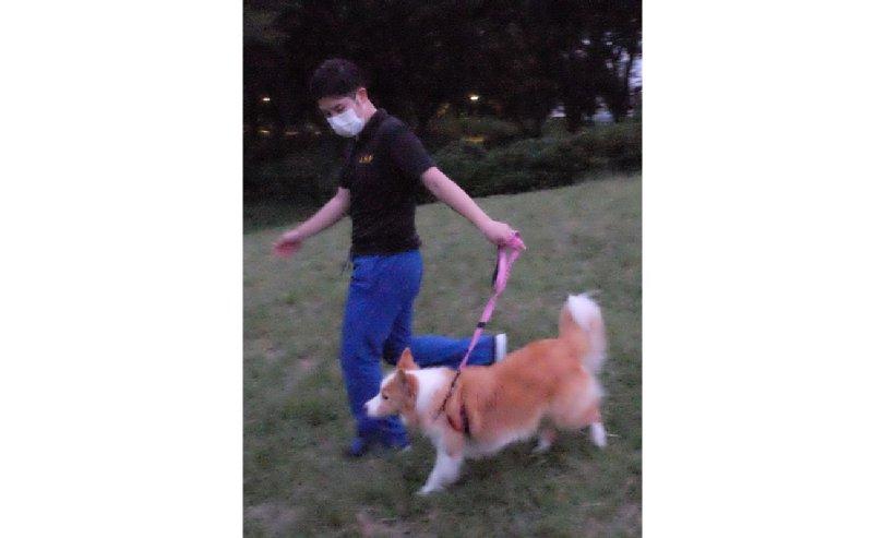 犬と飼い主が坂道を下っている