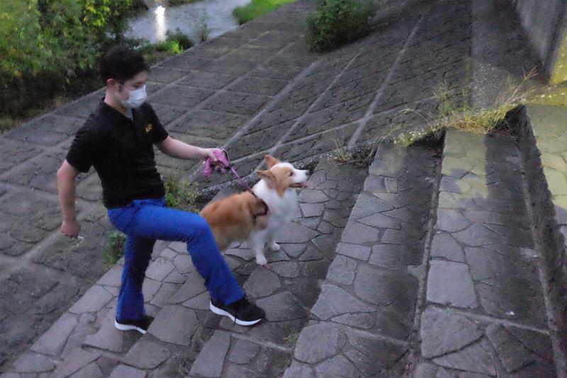 犬と階段を登る飼い主