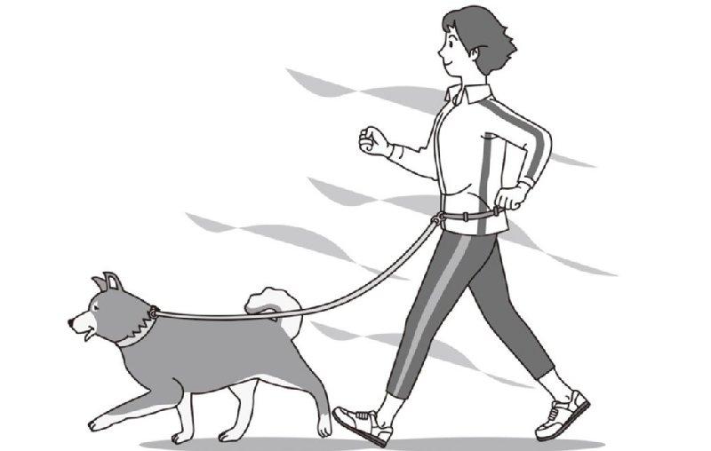 犬とインターバル速歩する人のイラスト
