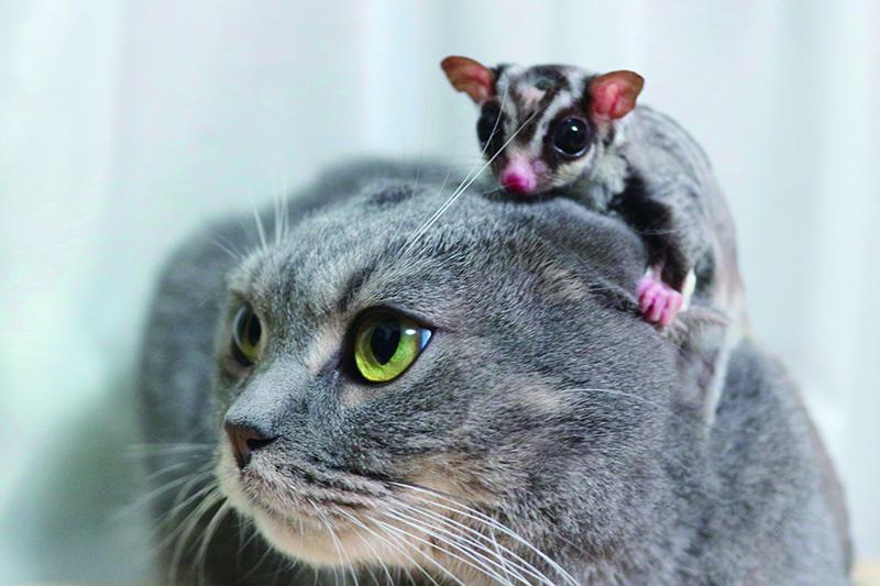 猫とフクロモモンガ