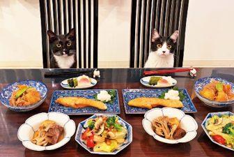 """藤あや子さんの""""ツインズにゃんこ""""にメロメロ 奇跡の一枚の連続で一躍、アイドル猫に"""