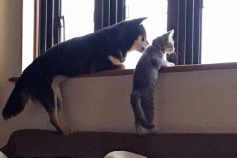 """猫と犬、猫とウサギetc.…にゃんこたちの""""種を超えた""""友情にほっこり"""