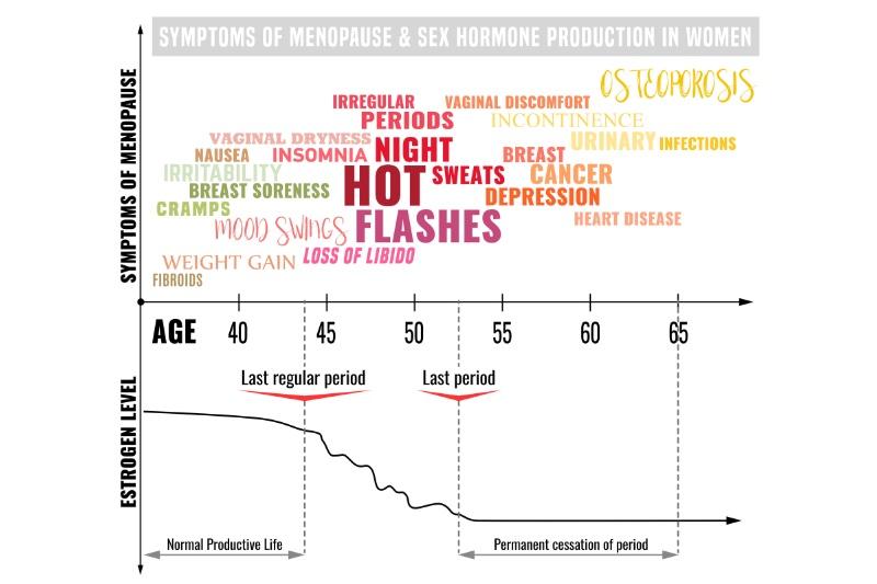 女性ホルモンの分泌量のイメージグラフ
