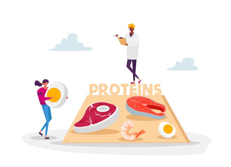 たんぱく質が豊富な食べ物のイメージイラスト